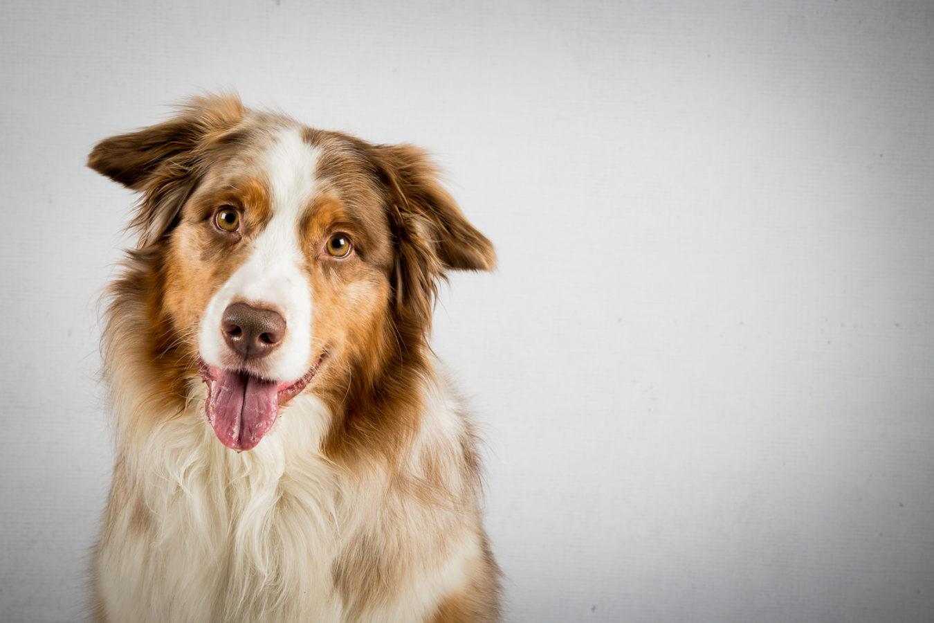 Hundefotograf-Erding-10