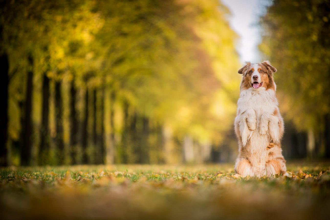 Hundefotograf-Erding-11