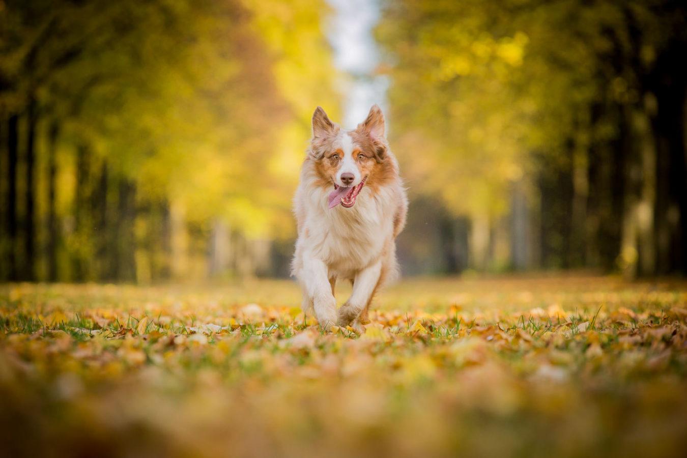 Hundefotograf-Erding-12