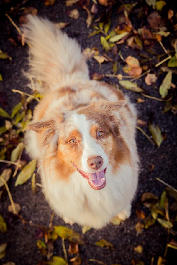 Hundefotograf-Erding-13