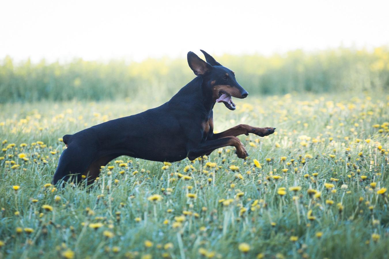 Hundefotograf-Erding-14