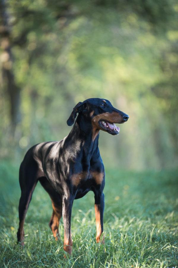 Hundefotograf-Erding-15