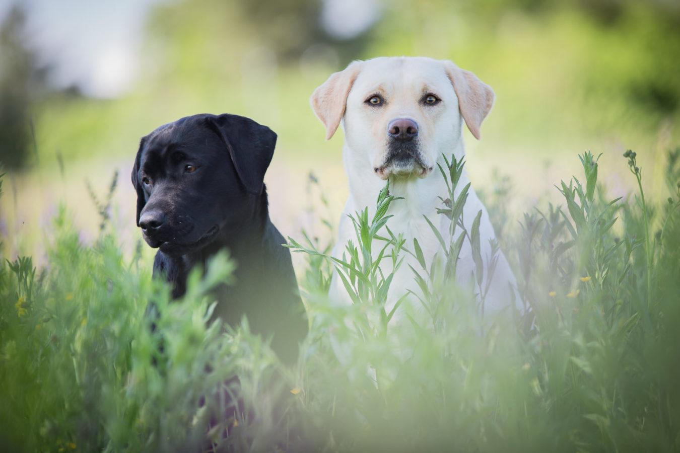 Hundefotograf-Erding-16