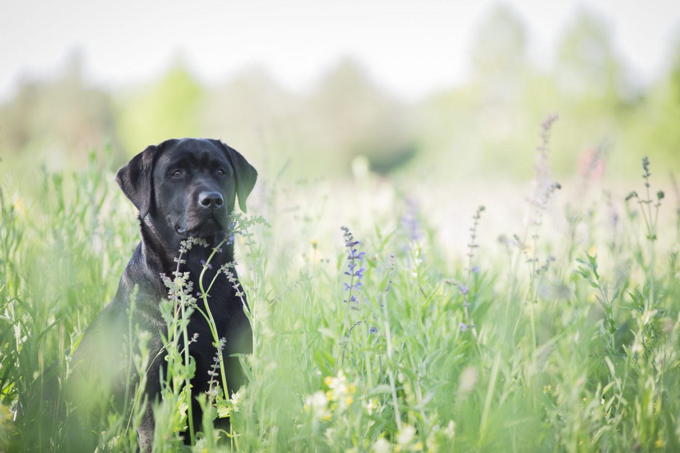 Hundefotograf-Erding-17