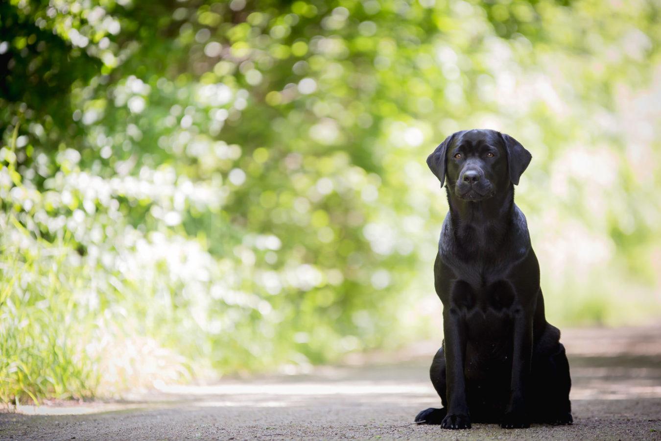 Hundefotograf-Erding-18