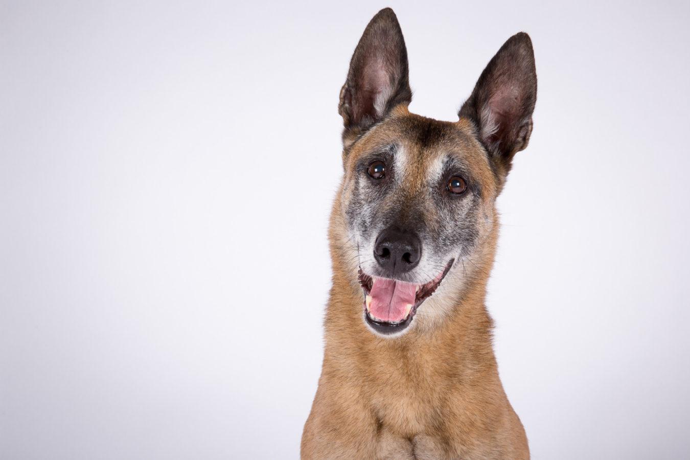 Hundefotograf-Erding-2