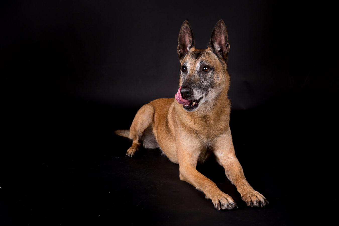 Hundefotograf-Erding-3