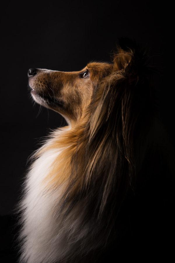 Hundefotograf-Erding-31