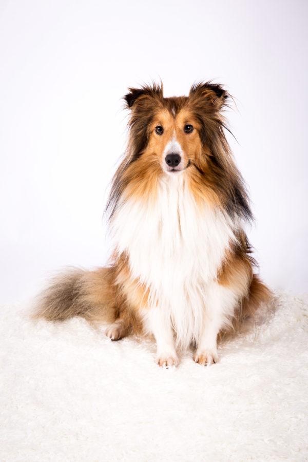 Hundefotograf-Erding-32