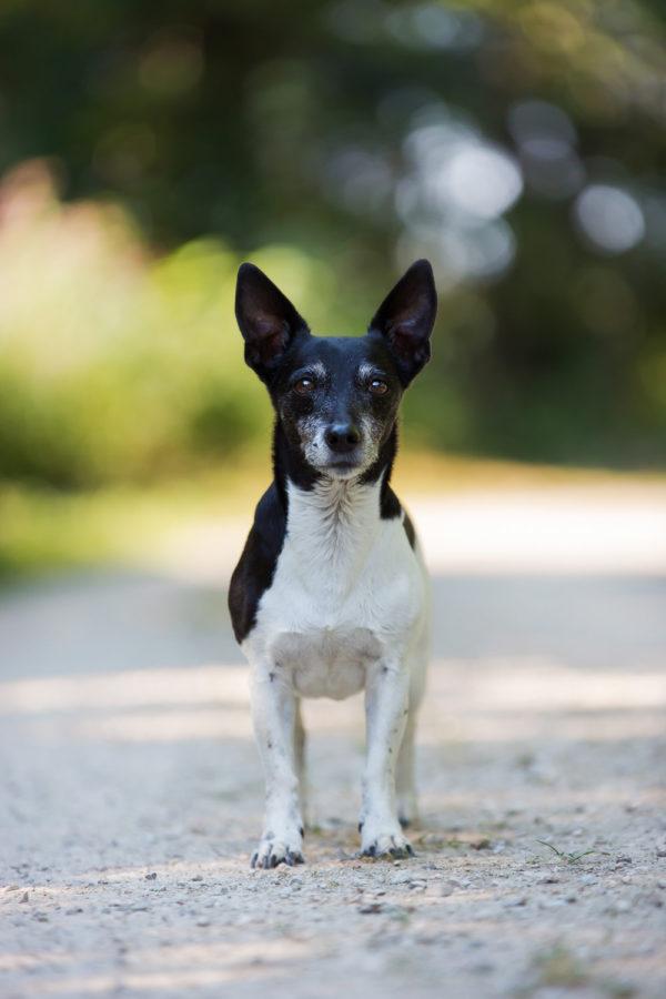 Hundefotograf-Erding-33