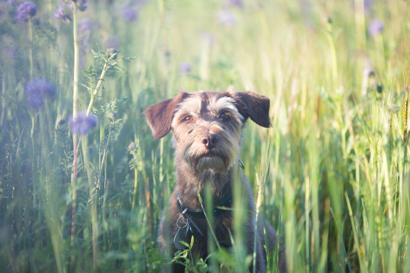Hundefotograf-Erding-34