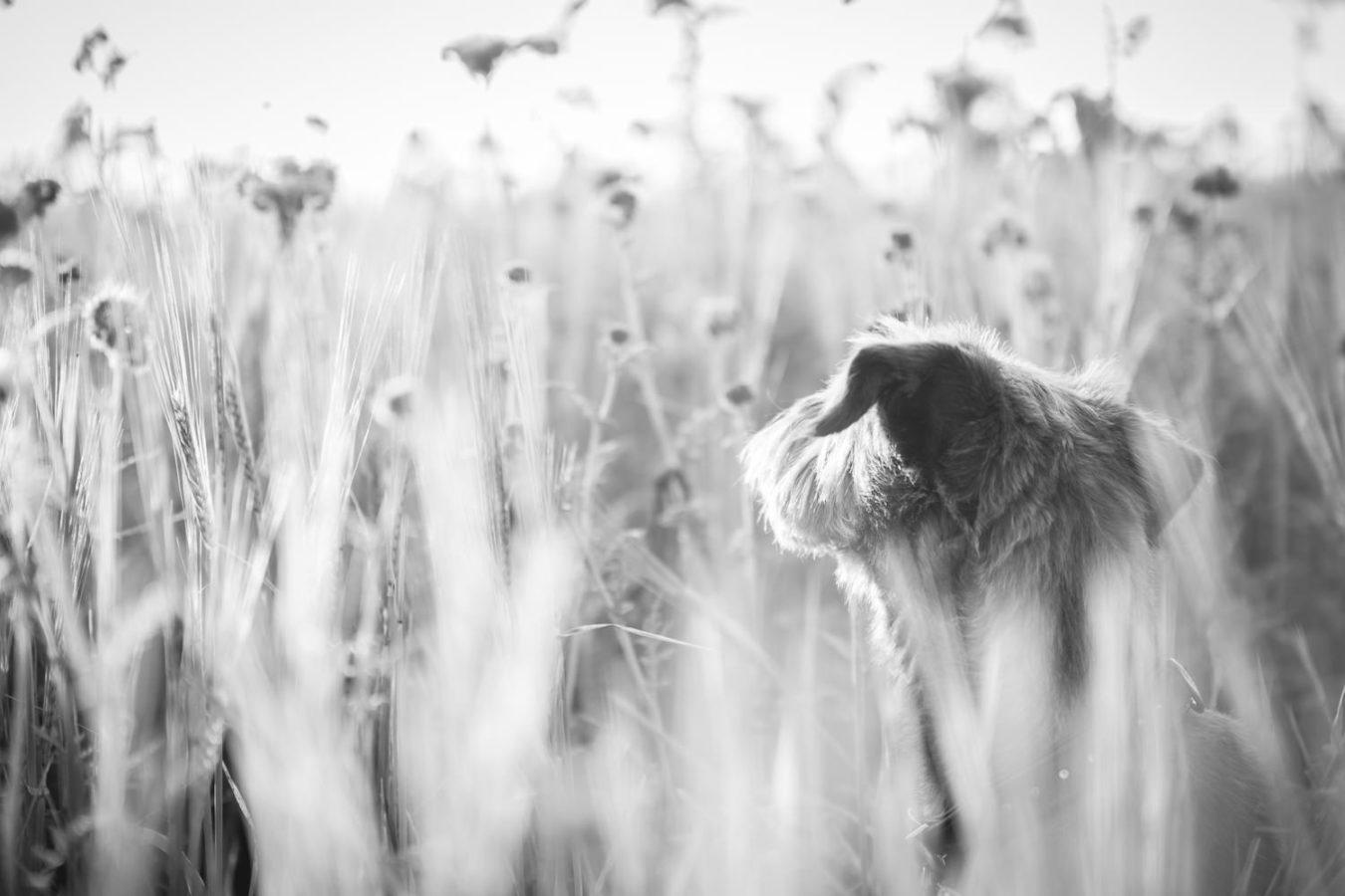 Hundefotograf-Erding-35