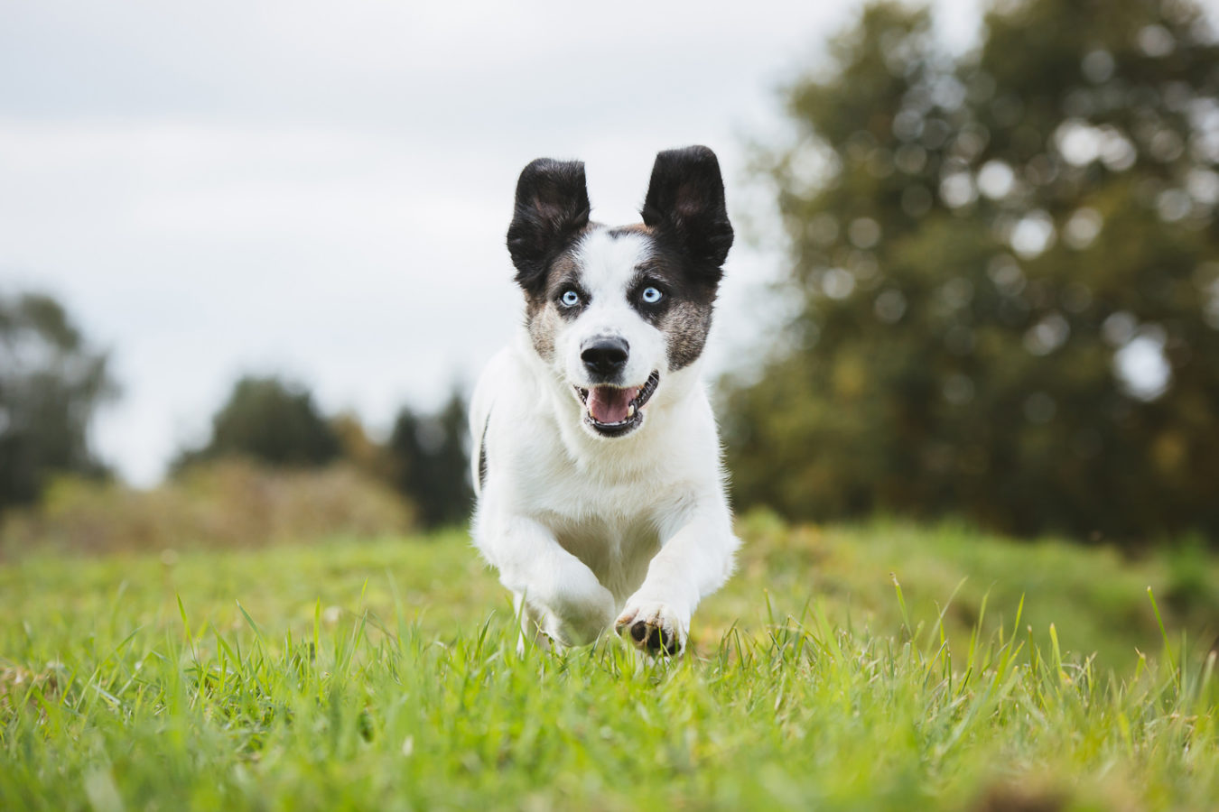 Hundefotograf-Erding-38