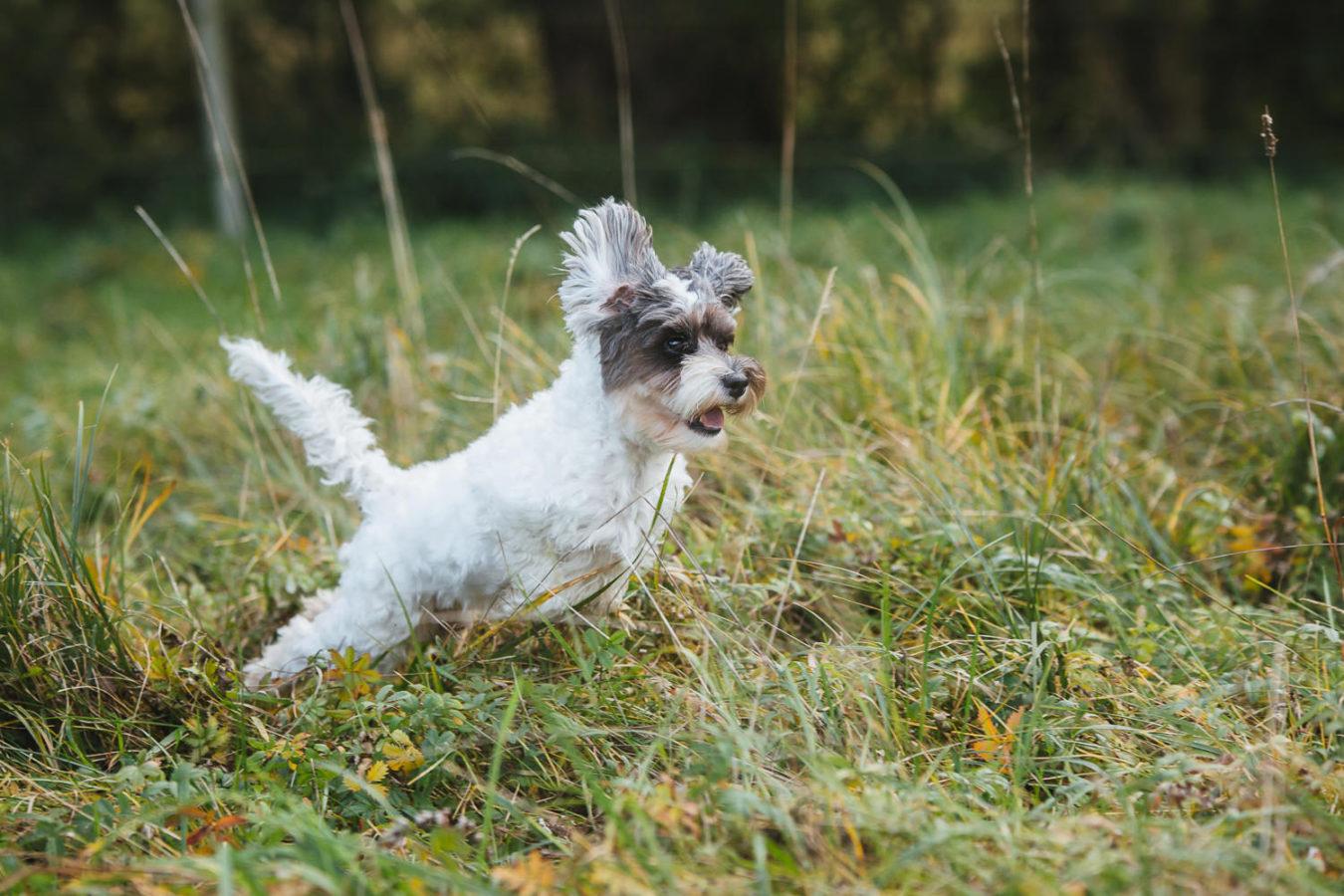 Hundefotograf-Erding-39