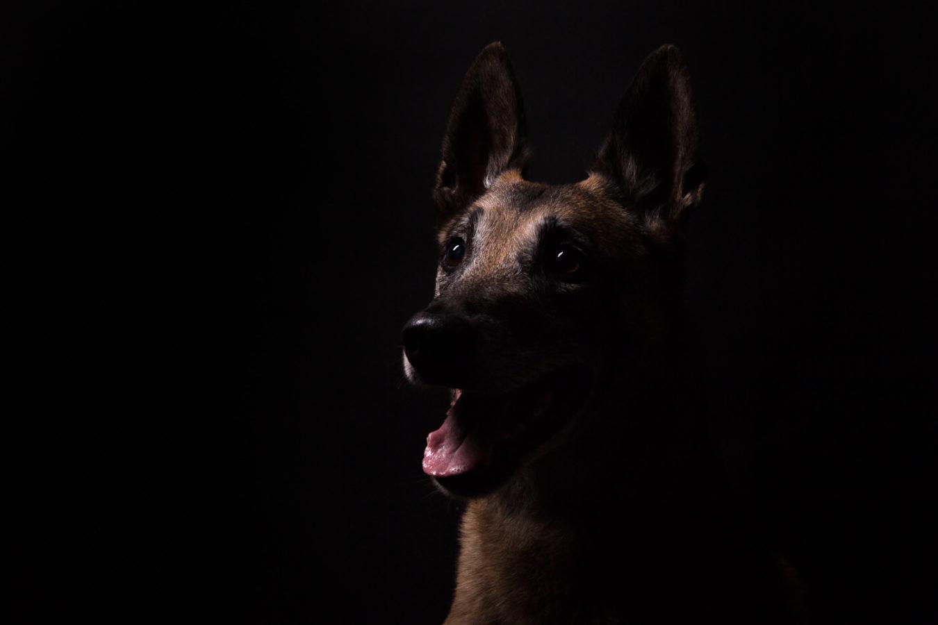 Hundefotograf-Erding-4
