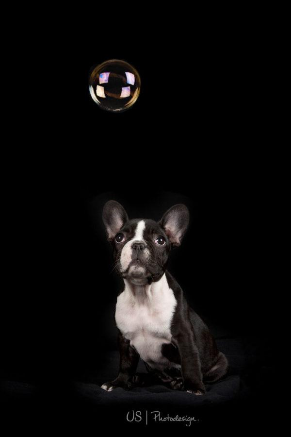 Hundefotograf-Erding-40