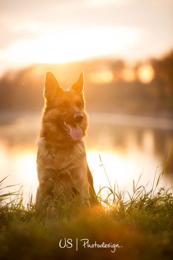 Hundefotograf-Erding-43