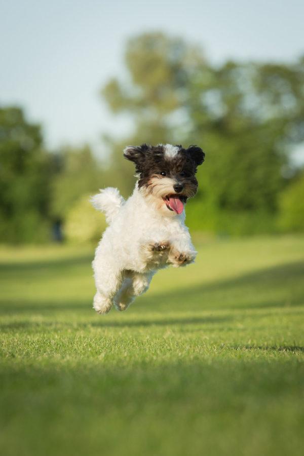 Hundefotograf-Erding-44