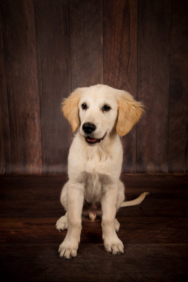 Hundefotograf-Erding-46