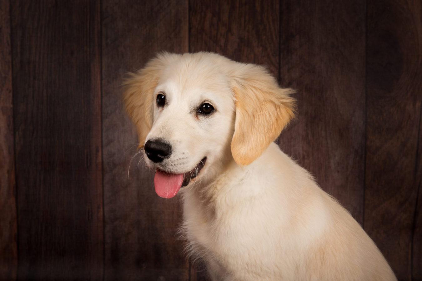 Hundefotograf-Erding-47