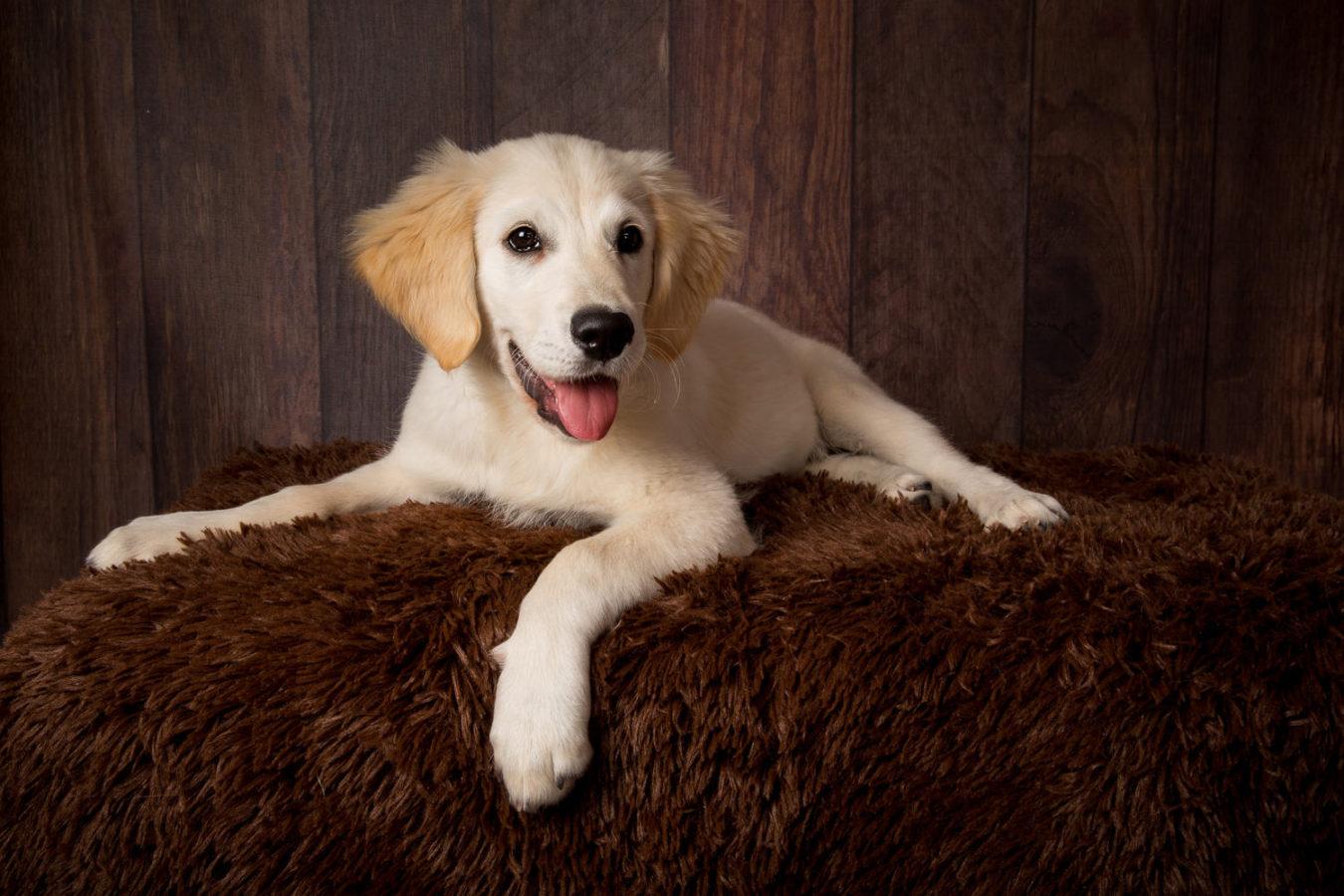 Hundefotograf-Erding-48