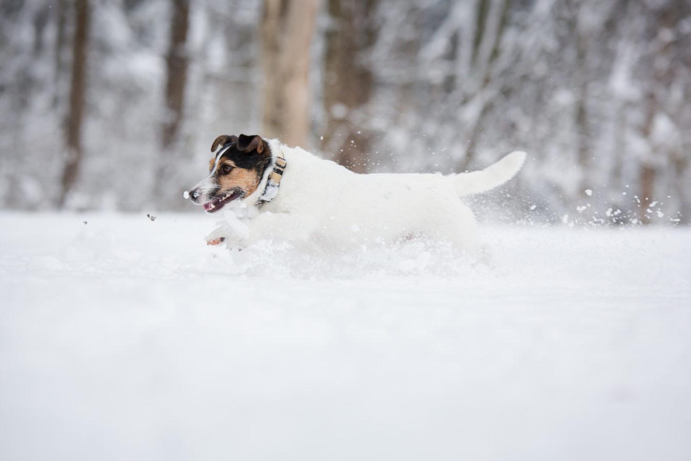 Hundefotograf-Erding-5