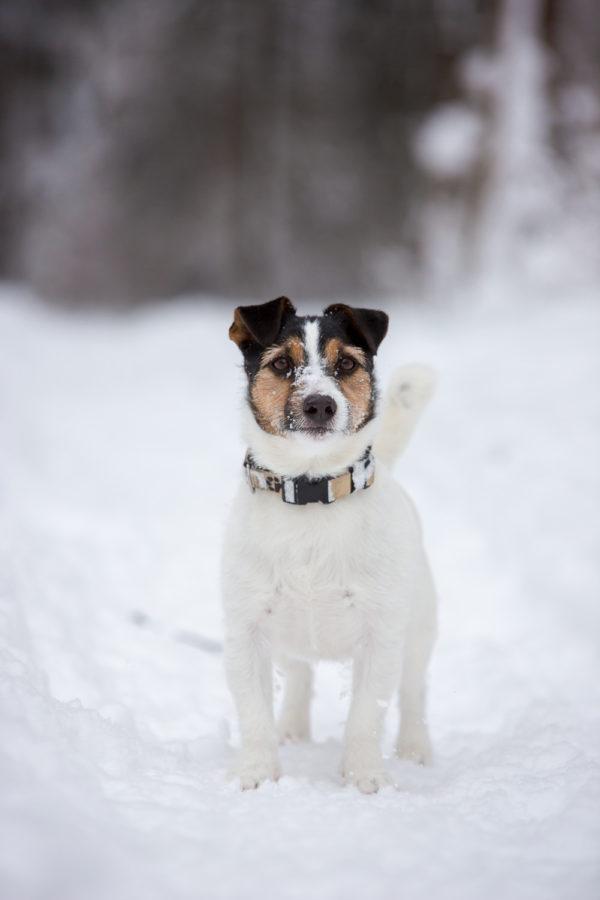 Hundefotograf-Erding-6