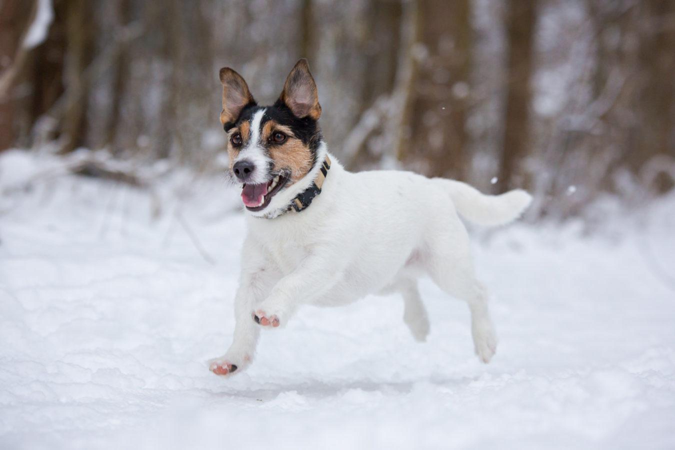 Hundefotograf-Erding-7