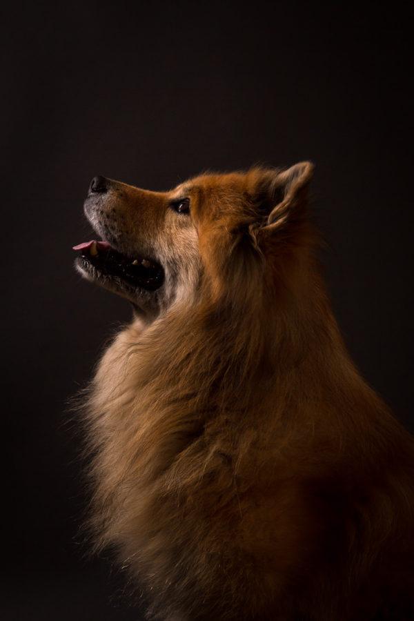 Hundefotograf-Erding-8
