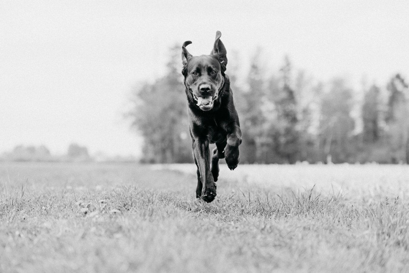 Hundefotograf-Erding-50