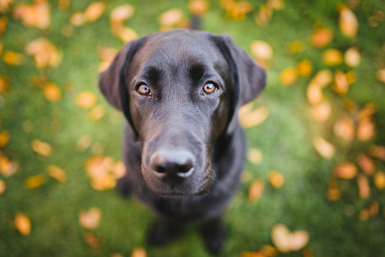 Hundefotograf-Erding-51
