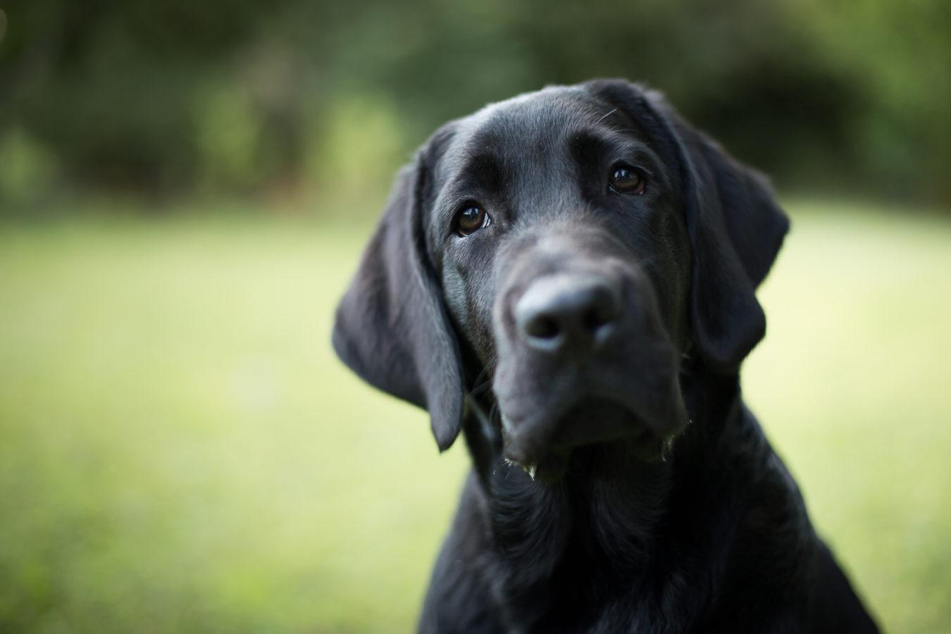 Hundefotograf-Erding-52